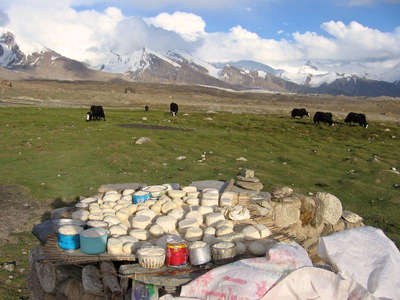 Goat and Yak cheese at Mt. Kongur, Xinjiang, China