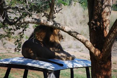 San Diego Zoo's Wild Animal Park, San Diego, CA