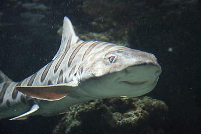 Monaco Aquarium