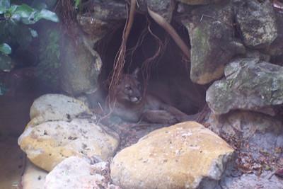 Palm Beach Zoo, FL