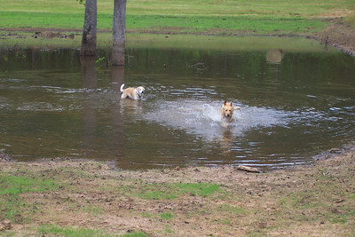 Wiley and Willa taking a dip in the dry gulch pond at Granger Hill, Equality, AL