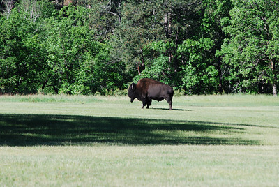 Another visitor at the Game Lodge, Custer State Park, Custer, SD