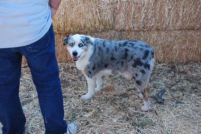 Stu Miller's dog, Pumpkin school, Thousand Oaks, CA