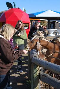 Log Barn Farm, Lake Mara  BC 10-12-09 013