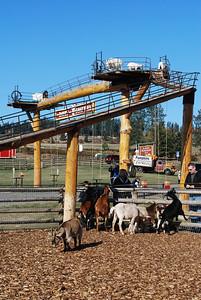 Log Barn Farm, Lake Mara  BC 10-12-09 010