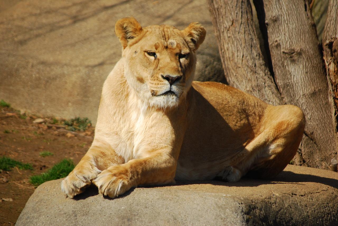 Louisville Zoo, KY 205