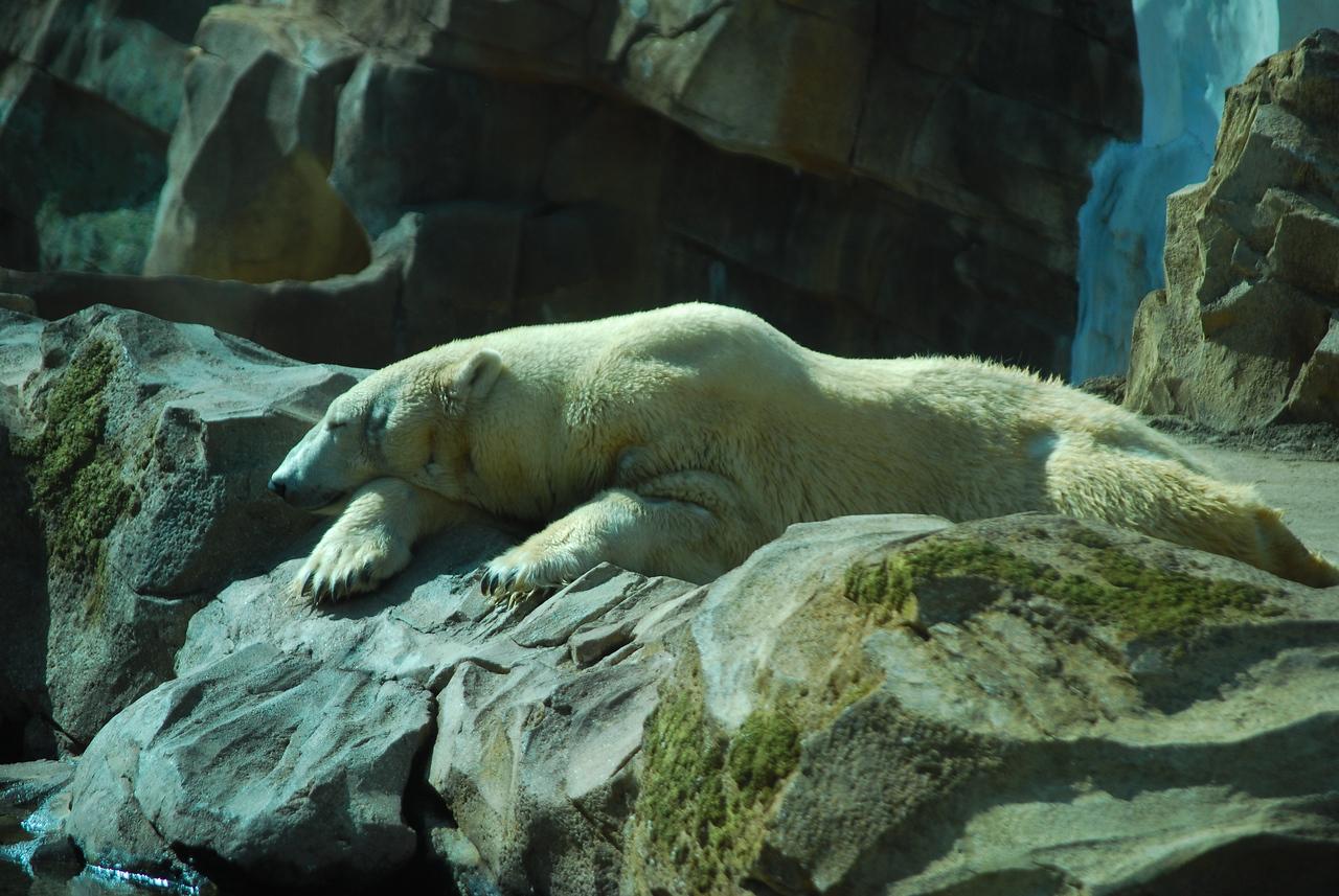 Louisville Zoo, KY 236