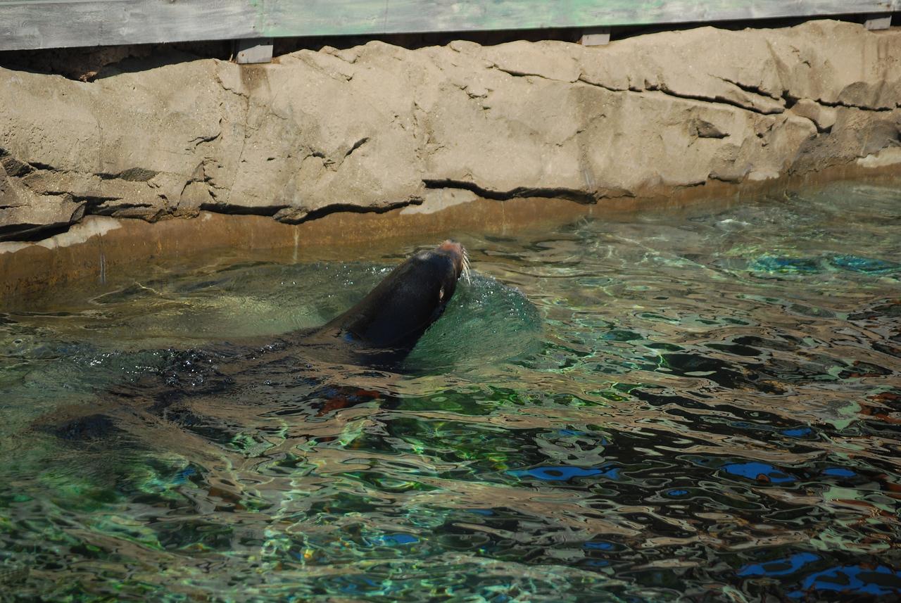 Louisville Zoo, KY 088