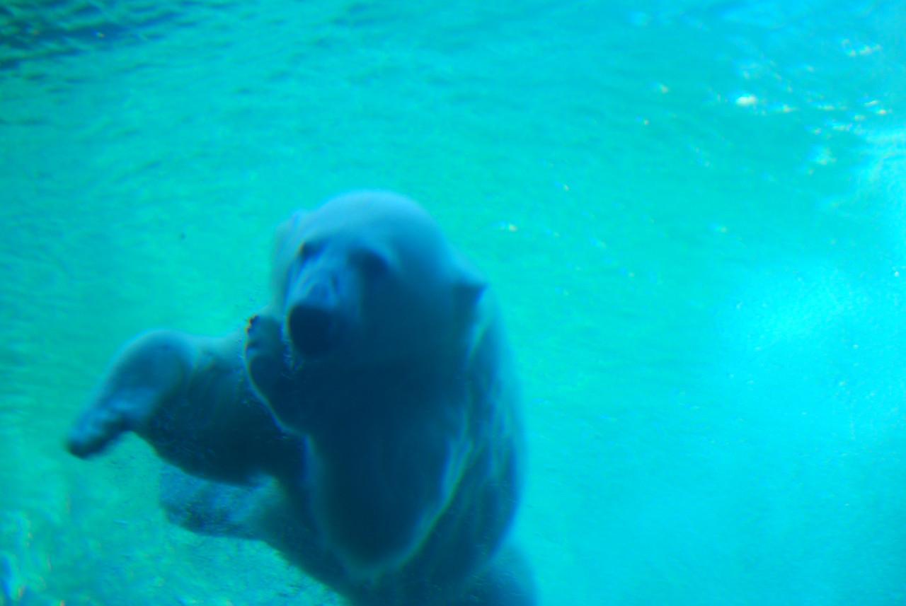 Louisville Zoo, KY 034