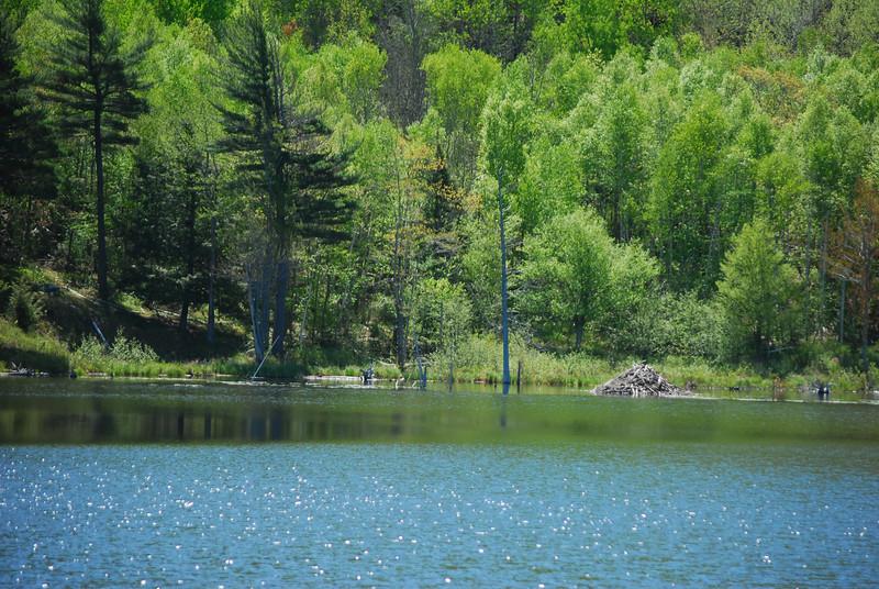 5-18-12 Acadia NP Loop, Gorsham Trail 014