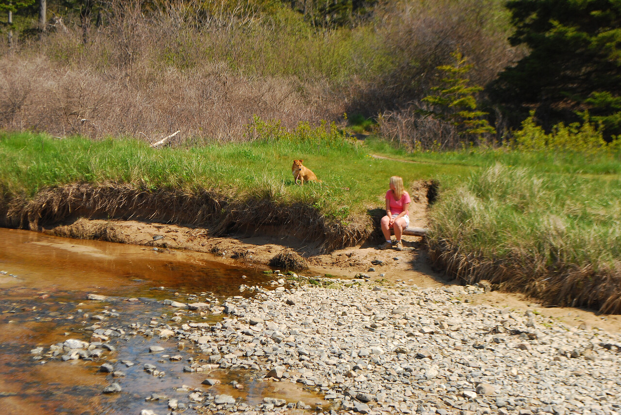 5-20-12 Great Head, Otter Cliff, Jordan Pond ME 001