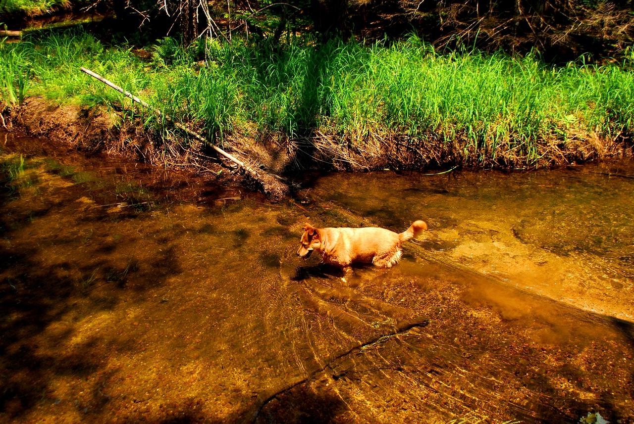 6-22-12 Long Pond-Jordan Creek Hike, ME 024