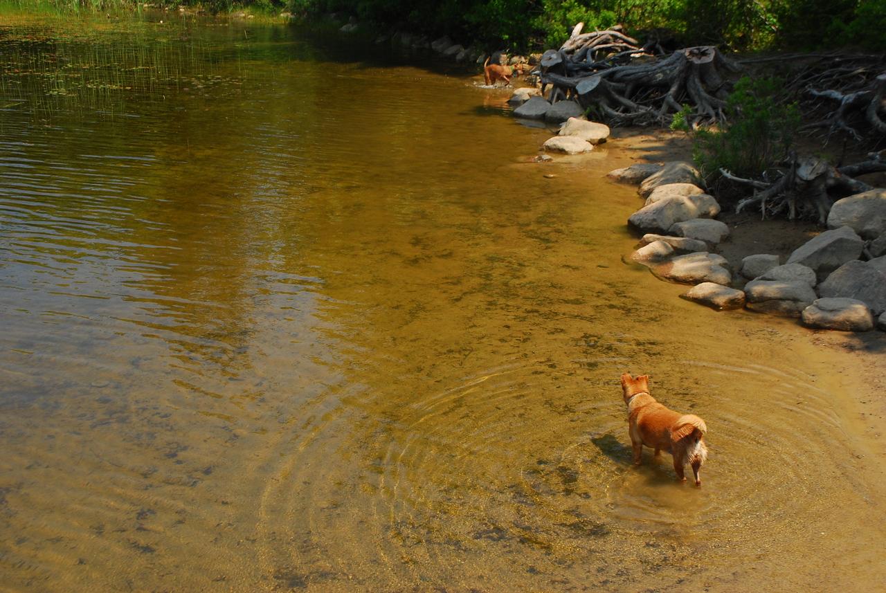 6-22-12 Long Pond-Jordan Creek Hike, ME 014