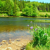 6-22-12 Long Pond-Jordan Creek Hike, ME 057