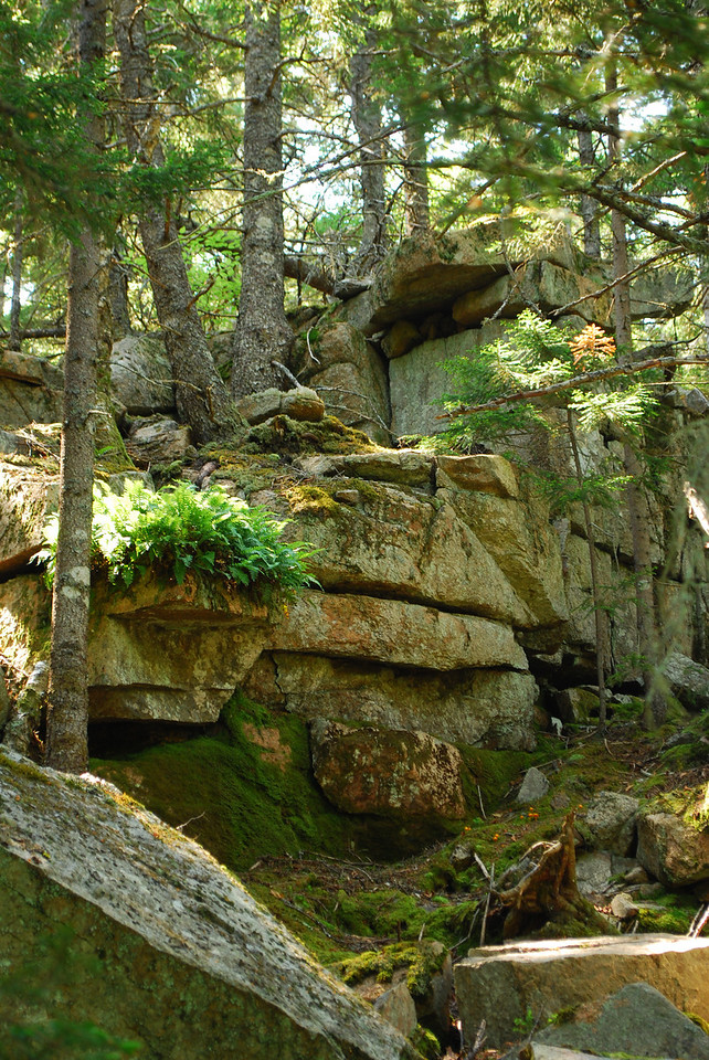6-22-12 Long Pond-Jordan Creek Hike, ME 048