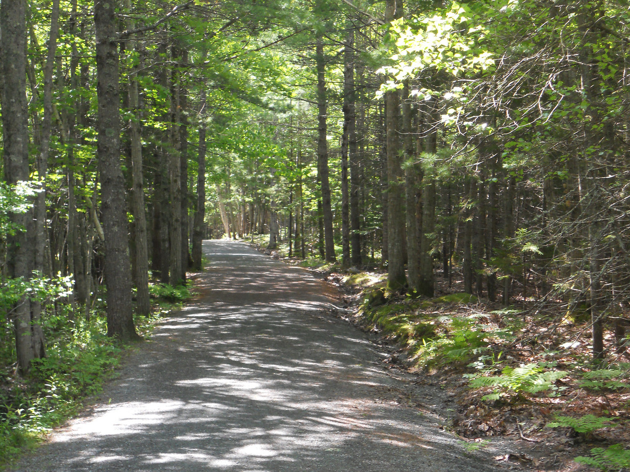 6-10-12 Buzzy pics, Acadia Bike Ride 009