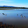 10-6-13 Centerra Lake Hike, Loveland, CO 016