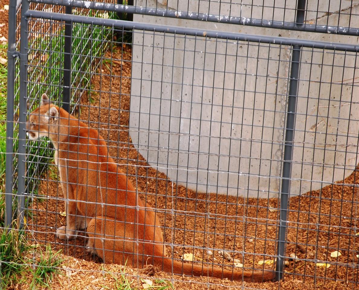 11-1-13 Wildlife Sanctuary, Keenesburg CO 011