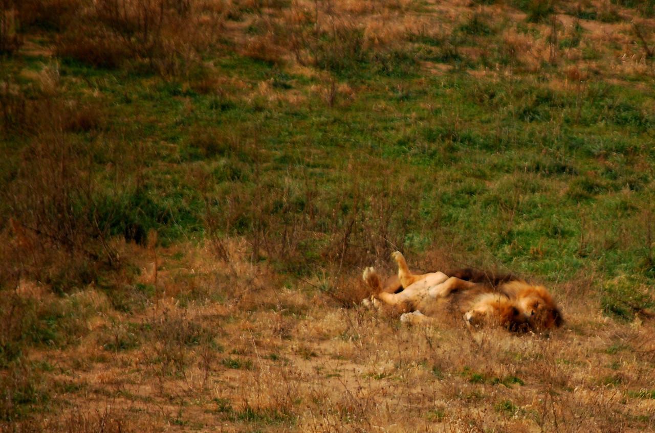 11-1-13 Wildlife Sanctuary, Keenesburg CO 143