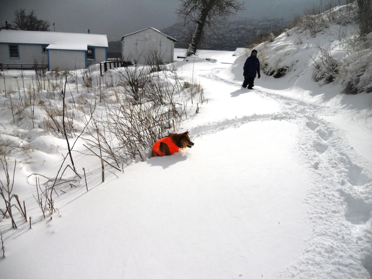 3-14-14  Snowy Mesa,  Zachar Bay AK 007