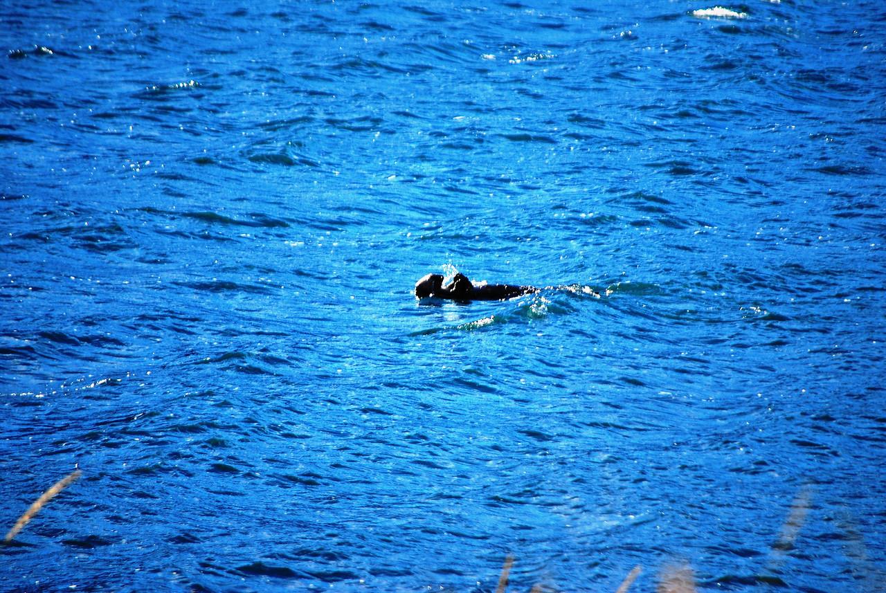 2-28-14  Otters, blintzes,  Zachar Bay AK 021