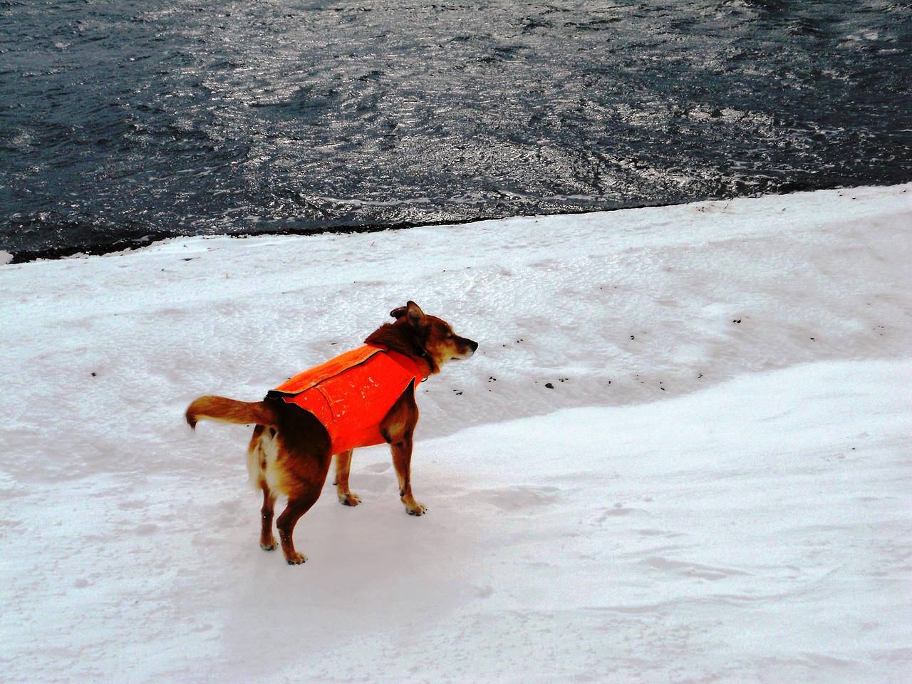 3-14-14  Snowy Mesa,  Zachar Bay AK 003
