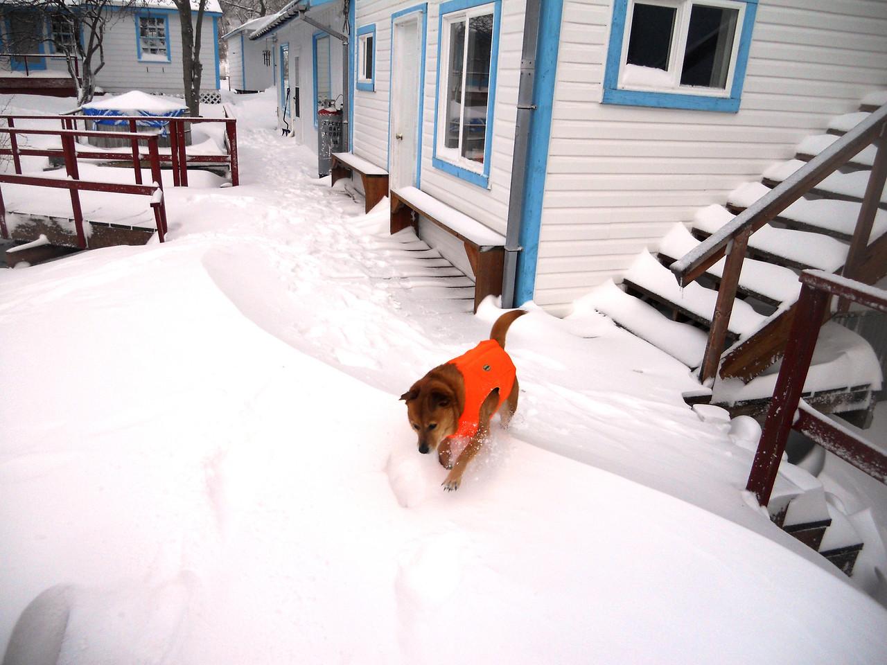 3-14-14  Snowy Mesa,  Zachar Bay AK 002