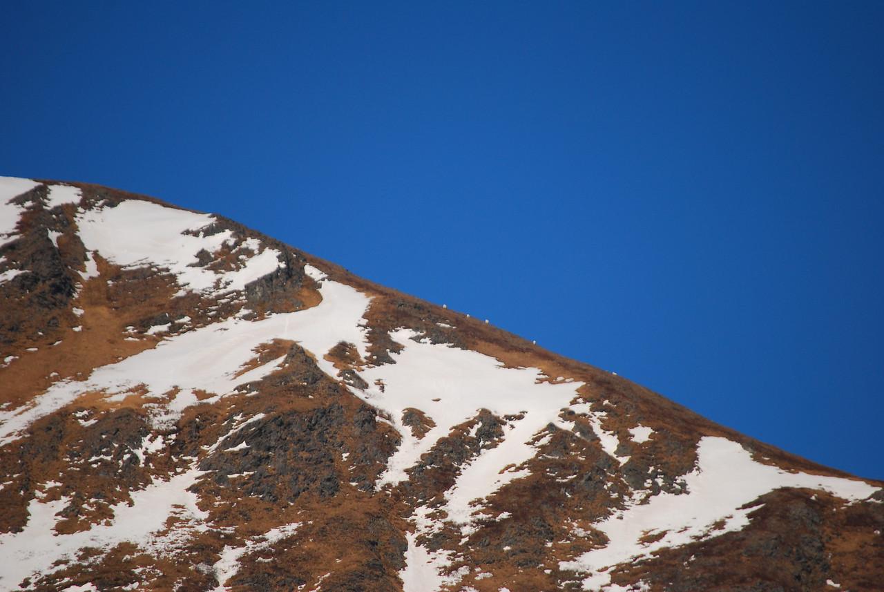 3-2-14   Seals Mountain Goats,  Zachar Bay AK 030