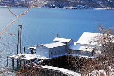 3-15-14  Fox, Snow Hike,  Zachar Bay AK 074