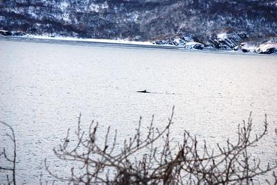 3-15-14  Fox, Snow Hike,  Zachar Bay AK 042
