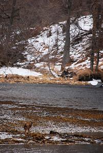 3-21-14  Hike to Bear Camp, Deer,  Zachar Bay AK 086