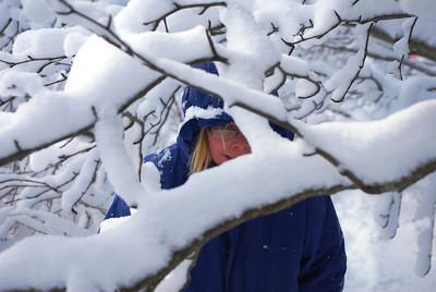 3-15-14  Fox, Snow Hike,  Zachar Bay AK 048