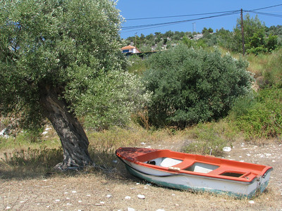 The Olive Tree and The Boat
