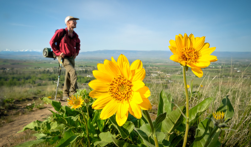Sunflowers and a View