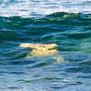 Sea turtles body surfing