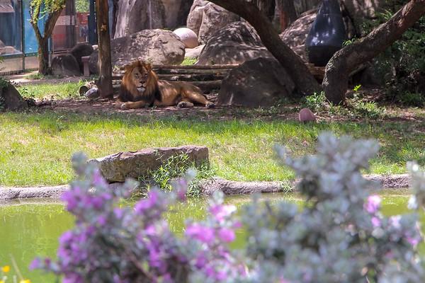Houston Zoo 7/1/18