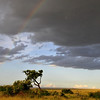 Storm clouds brewing on the Masai Mara plains - Masai Mara, Kenya