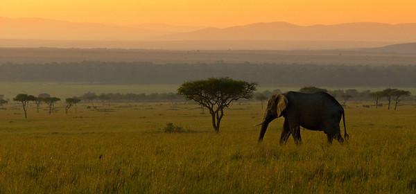 safari 1053