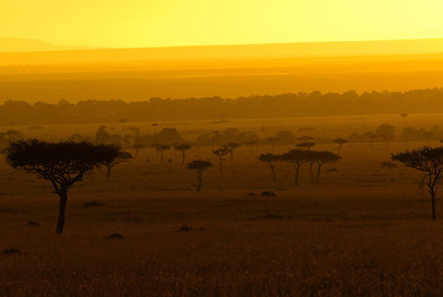 Safari 1056