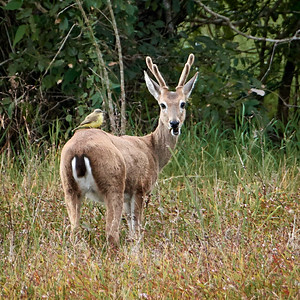 Deer and Bird - M