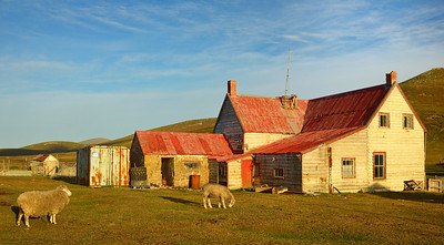 The Settlement at Saunders Island