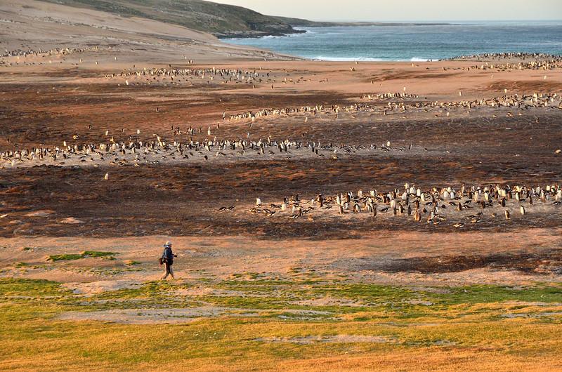Vista with Penguins;  the 'Neck' -M