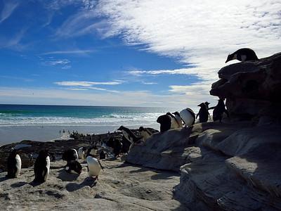 Rockhopper Penguins on the Cliffs