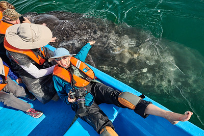 Gray Whale Calf-with Myrna