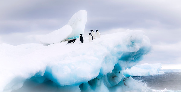 Penguins on a Cloud of Snow