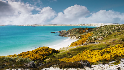 Gypsy Cove and Yorke Bay in the Falkland Islands.