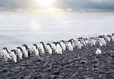 March of the Penguins...