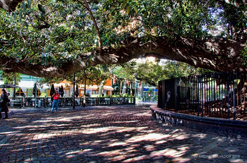 Plaza Silva near the Recoleta cemetery. The plaza was built around a giant banyan tree.