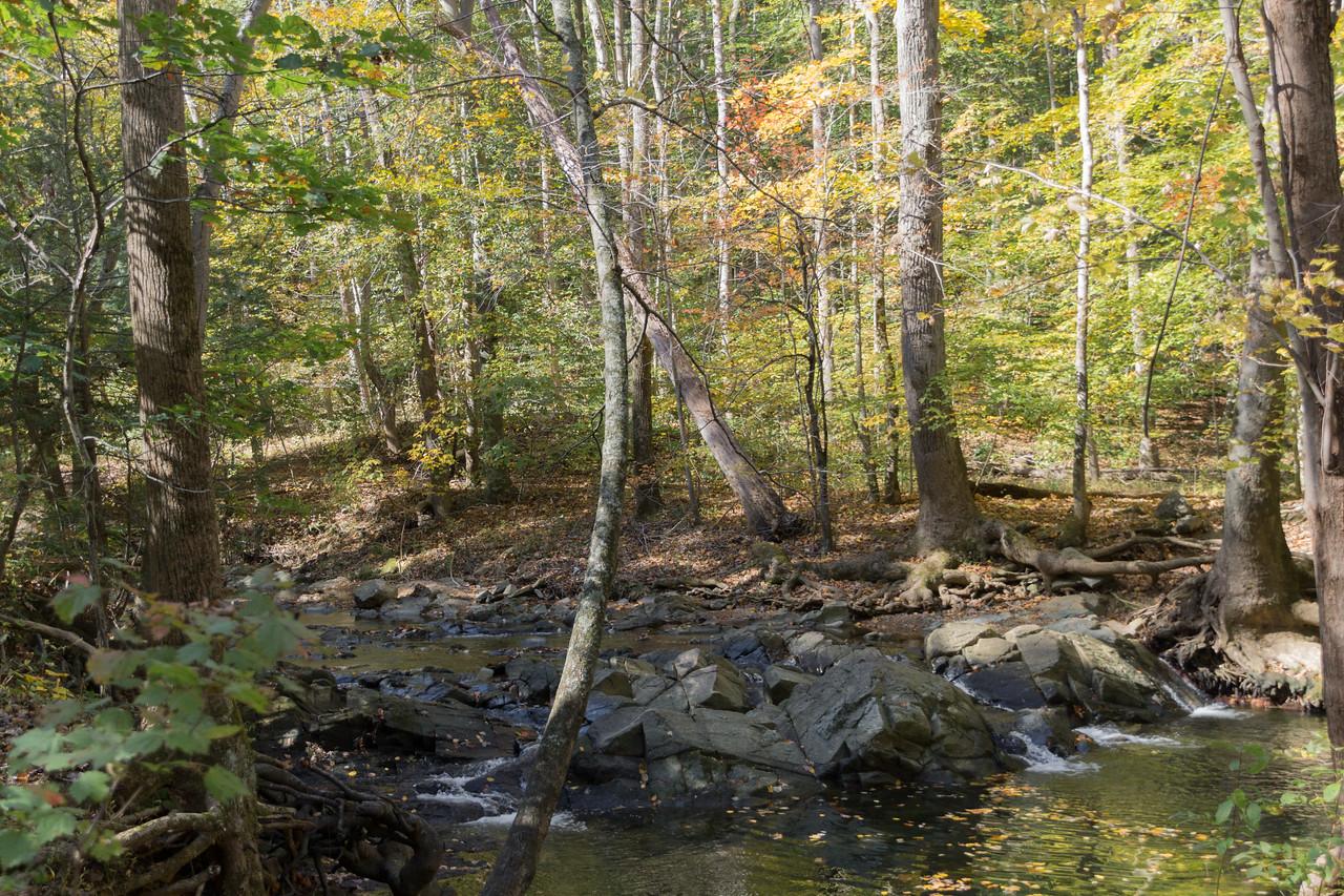Scotts Run Stream Valley Park, McLean, Virginia