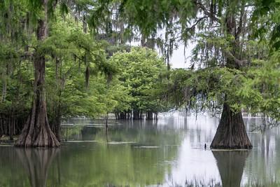 Martin Lake, Louisiana